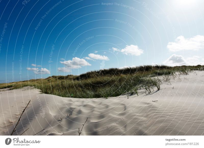 WHITE DUNE, NORDERNEY Beach dune Dune White Marram grass Colour photo Copy Space top Norderney East Frisland Northern Germany Island North Sea Back-light