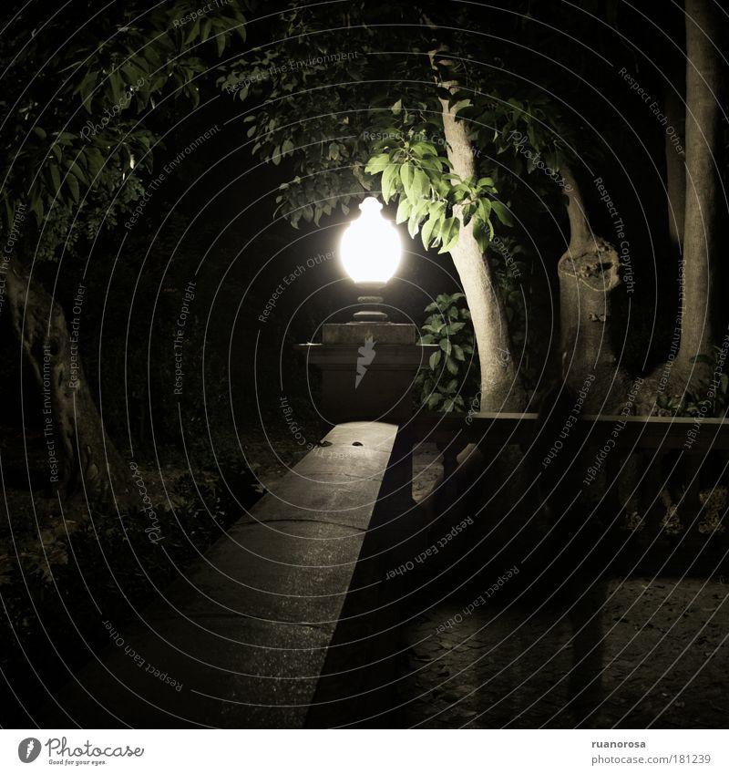 Tree Plant Lamp Garden Park Landscape Fear Fantastic Mysterious Night Lantern Old town Spooky Summer night Glass lantern