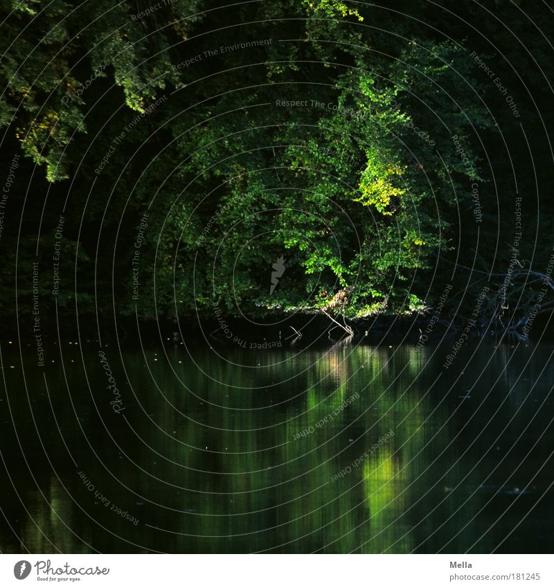 Nature Water Tree Green Plant Summer Calm Loneliness Dark Autumn Sadness Lake Park Landscape Moody Environment