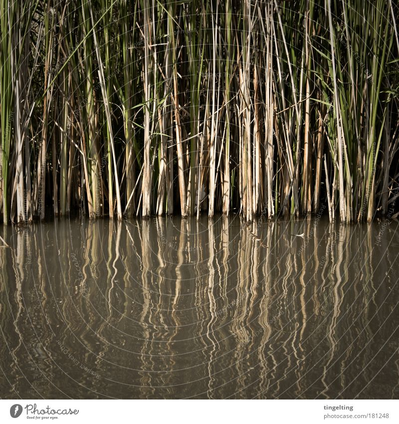 Nature Water Green Plant Black Yellow Dark Grass Line Brown Glittering Growth Threat Simple Thin Natural