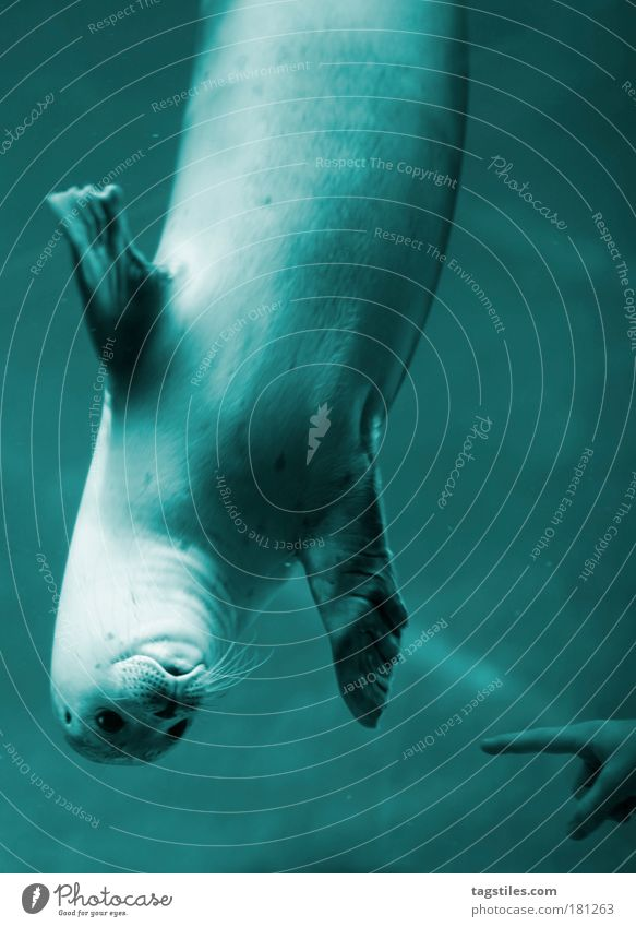 HAGE, MENSCHN... a.k.a. GUCK MAL WAS I CAN... Seals Water overhead Wave Hello Blue Indicate Forefinger Looking times Ocean Marine animal Opposite Marine mammal