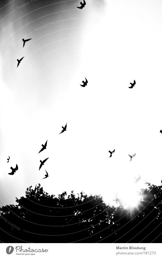 Nature Animal Death Park Air Moody Bird Fear Environment Black & white photo Dangerous Authentic Threat Wing Wild Exceptional