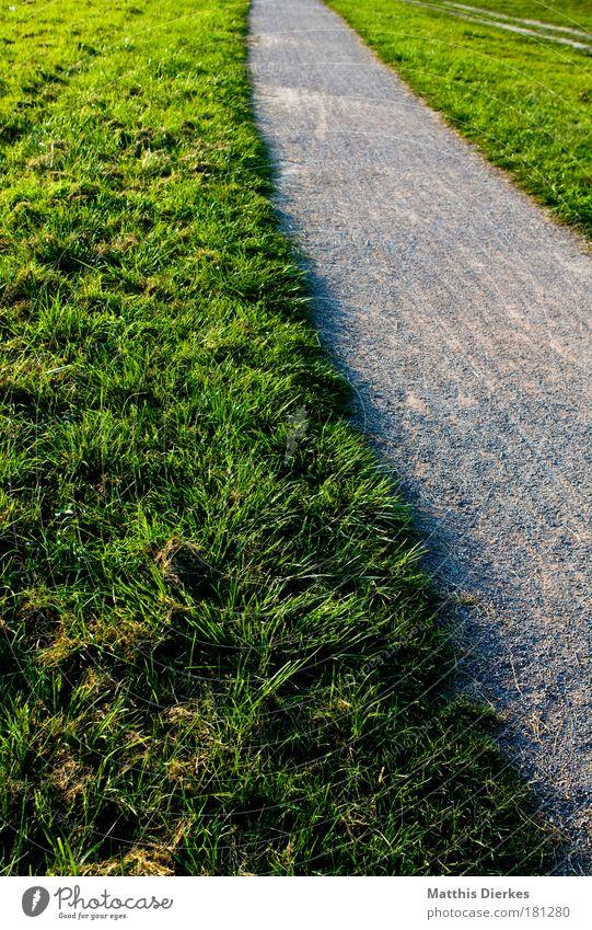 Plant Loneliness Meadow Garden Lanes & trails Park Field Going Village Meditative Outskirts