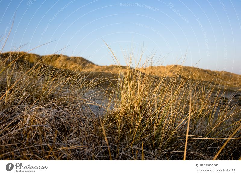 Sky Nature Vacation & Travel Plant Ocean Winter Beach Environment Death Landscape Cold Sand Coast Dream Ice Climate