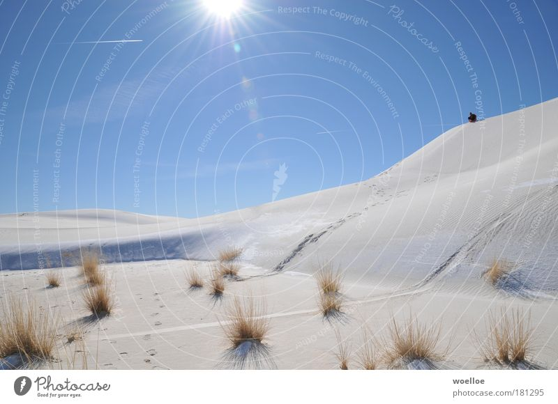 Sky Nature Blue White Plant Sun Winter Joy Environment Landscape Cold Snow Grass Sand Bright Ice