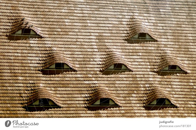 House (Residential Structure) Window Architecture Building Bird Change Roof Manmade structures Past Pigeon Roofing tile Scales Animal Dormer Shingle roof