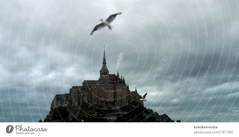 White Clouds Animal Bird Architecture Flying Roof Threat Wing Fantastic Creepy France Manmade structures Historic Storm