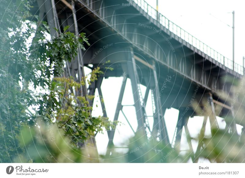 Nature Calm Contentment Tall Railroad Force Bridge Gloomy Logistics Protection Railroad tracks Idyll Strong Connection Traffic infrastructure Electricity pylon