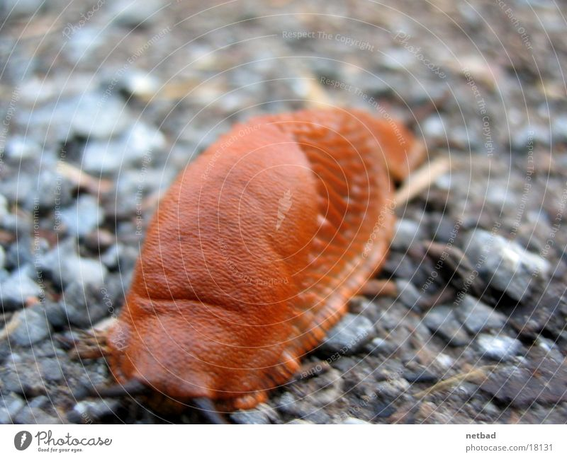snail over gravel Slug Slowly Stony Snail
