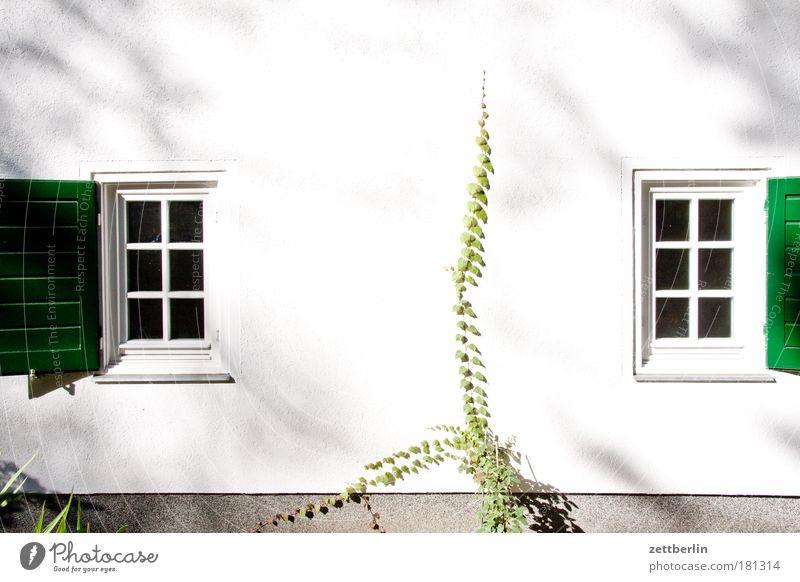 Two windows 2 White Garden House (Residential Structure) Gardenhouse Garden plot Ivy Tendril Window Curtain Window arch Shutter Open Ventilate Ventilation Air