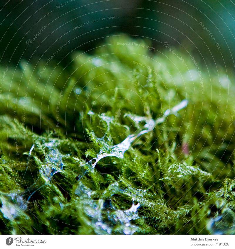 Ground Floor covering Moss Mucus Resin Saliva Sputum
