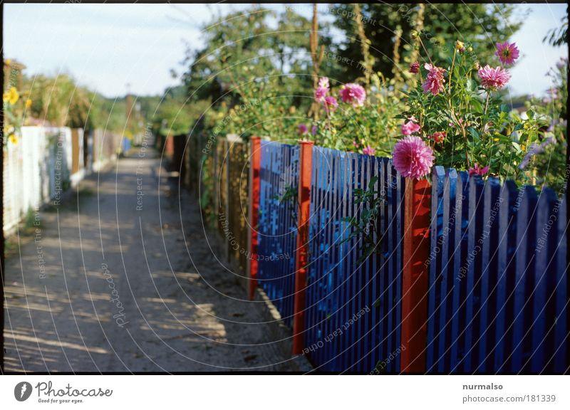 Nature Plant Summer Flower Environment Lanes & trails Garden Leisure and hobbies Living or residing Decoration Lifestyle Uniqueness Communicate