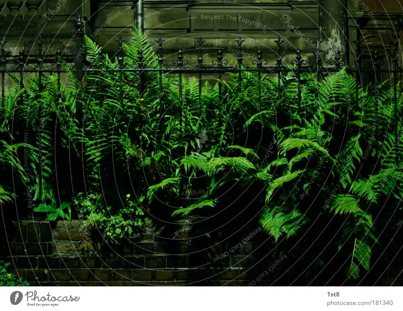 far vs fence Colour photo Deserted Copy Space top Copy Space bottom Night Artificial light Wide angle Wrought ironwork Smith Nature Plant Fern Foliage plant