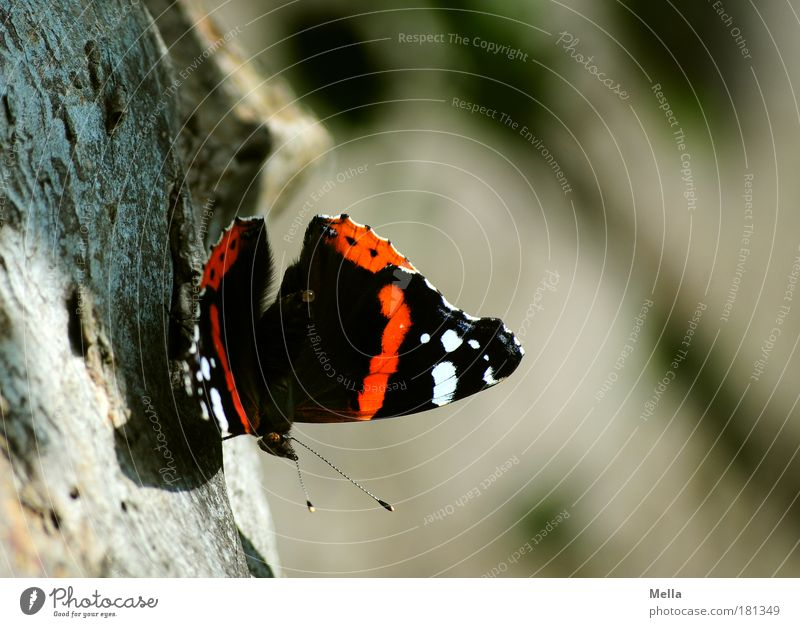 Nature Beautiful Tree Animal Calm Environment Life Wood Park Sit Natural Esthetic Change Idyll Delicate Insect