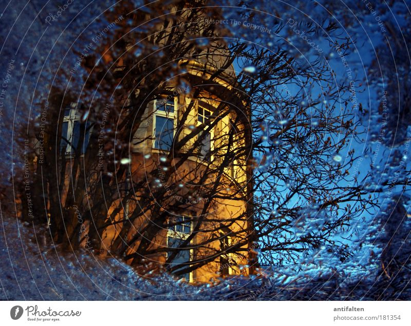 Franconian Square Nature Water Drops of water Sky Sunlight Autumn Winter Rain Tree Bushes Puddle Garden Park Duesseldorf Germany House (Residential Structure)