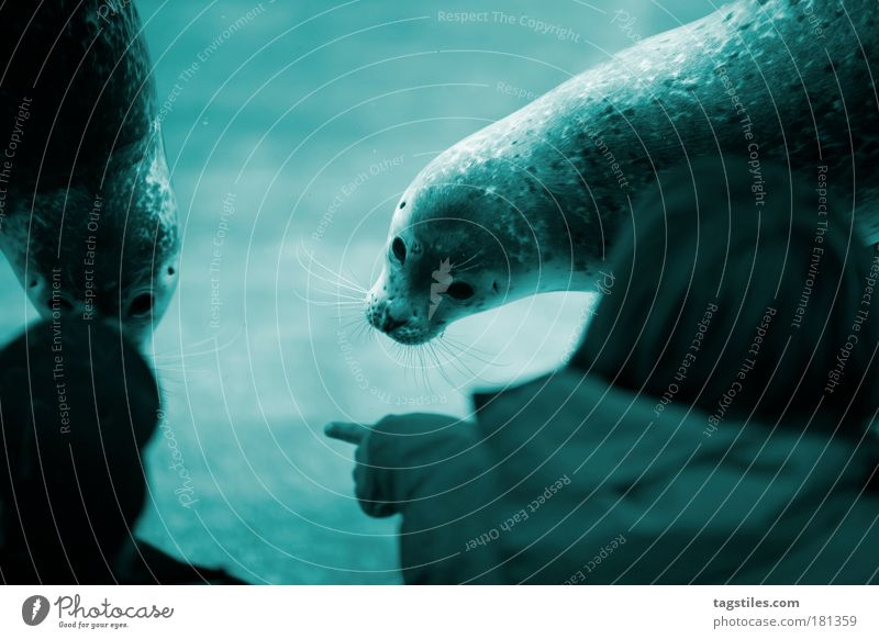 Nature Water Ocean Blue Animal Life Playing Contact Curiosity Interest Select Indicate Enthusiasm Marvel Encounter Alert