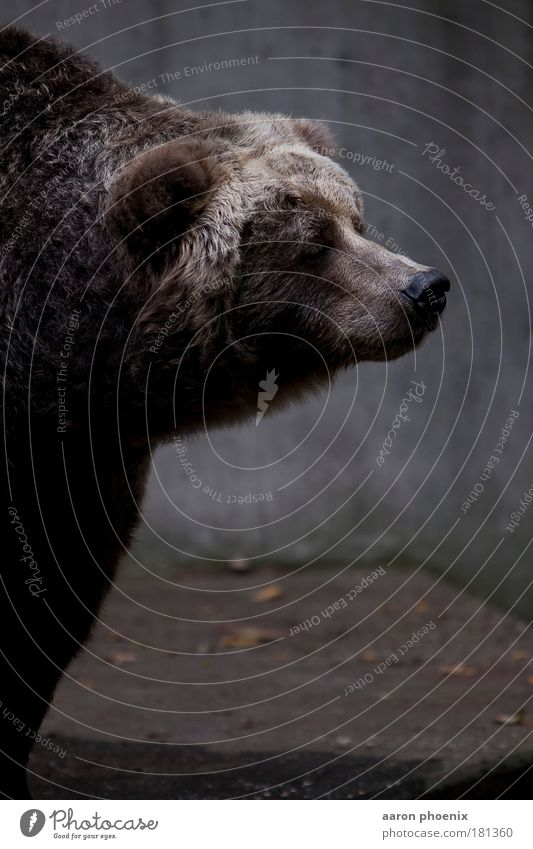Animal Cold Mountain Gray Brown Rock Wild animal Threat Curiosity Pelt Friendliness Animal face Zoo Muscular