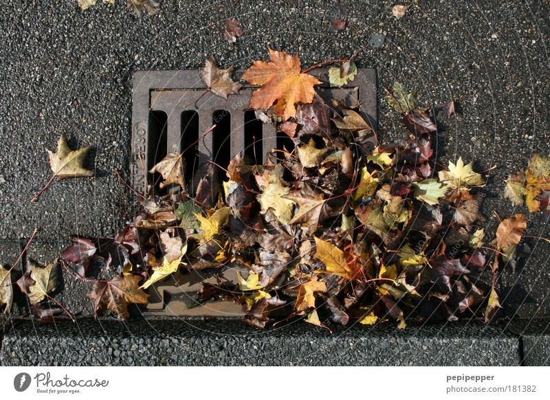 Nature Leaf Autumn Street Environment Gray Park Line Brown Wet Concrete Transience Sidewalk Steel Motoring Road traffic
