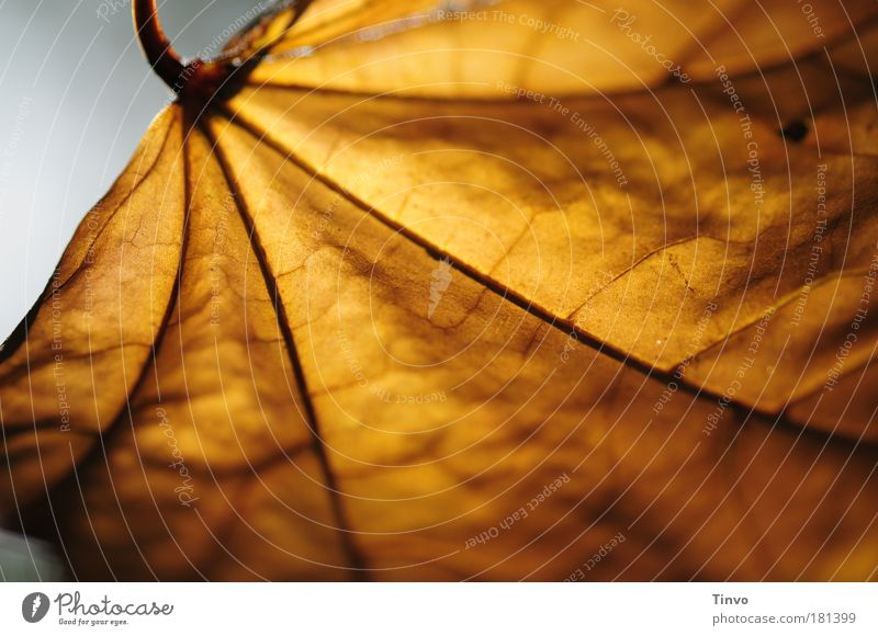 Nature Loneliness Leaf Calm Warmth Autumn Contentment Idyll Future Uniqueness Seasons Shriveled Vessel Limp Optimism Branched