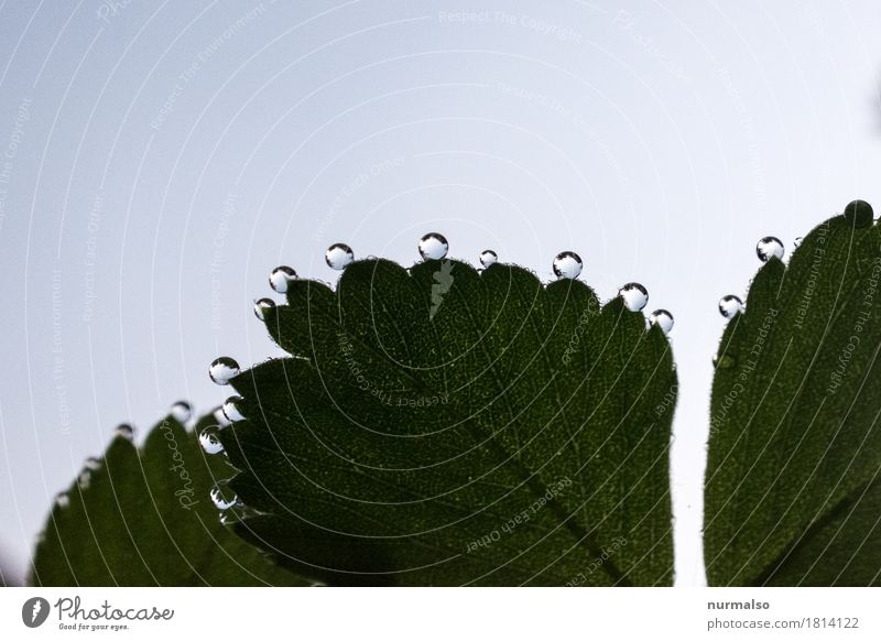 Sky Nature Plant Beautiful Relaxation Leaf Animal Natural Feminine Happy Art Moody Illuminate Dream Glittering Esthetic