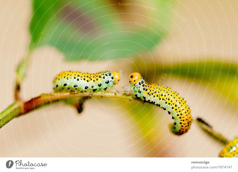 Caterpillar intersection Summer Nature Animal Butterfly Yellow Contentment Bug caterpillar Living thing Insect Larva Metamorphosis Colour photo