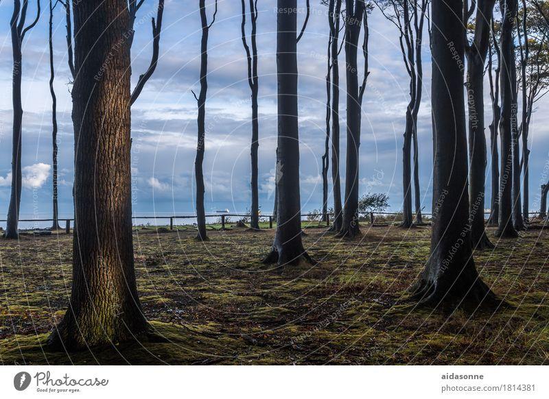 Nature Landscape Calm Forest Contentment Baltic Sea Serene Watchfulness Caution Patient Attentive