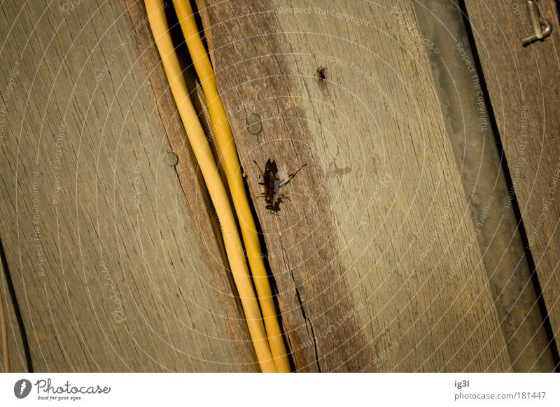 Nature Summer Vacation & Travel Animal Street Work and employment Wood Environment Transport Logistics Communicate Highway Beautiful weather Wasps Freeway