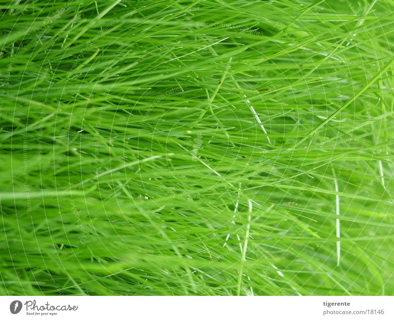 Green Grass Fresh Juicy