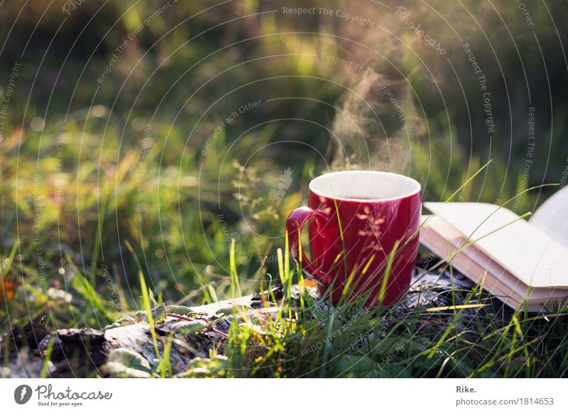 Autumn love. Leisure and hobbies Vacation & Travel Trip Adventure Summer To enjoy Dream Contentment Warm-heartedness Calm Cup Drinking Reading Book Nature