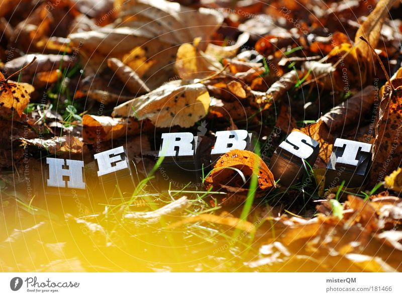 Nature Leaf Autumn Art Brown Contentment Infancy Exceptional Characters Esthetic Ground Beautiful weather Seasons Autumn leaves Home country Autumnal
