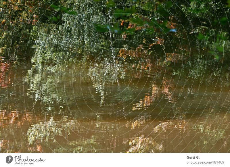white water Water Water reflection Reflection Surface of water Autumn Tree Leaf Distorted Skewed Autumnal Bizarre Mosaic Abstract