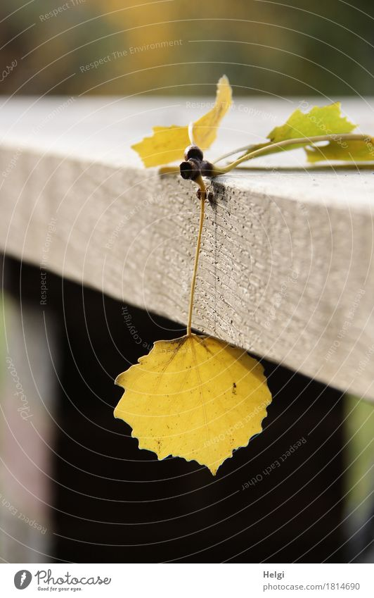 Nature Plant Green Leaf Environment Yellow Autumn Natural Wood Small Exceptional Brown Moody Lie Table Uniqueness