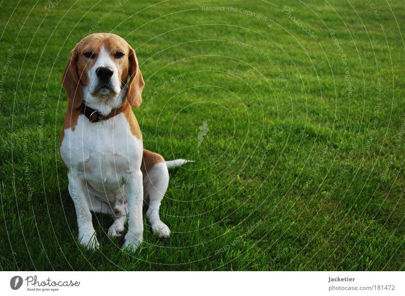 White Green Dog Brown Wait Observe Breathe Pet Pride
