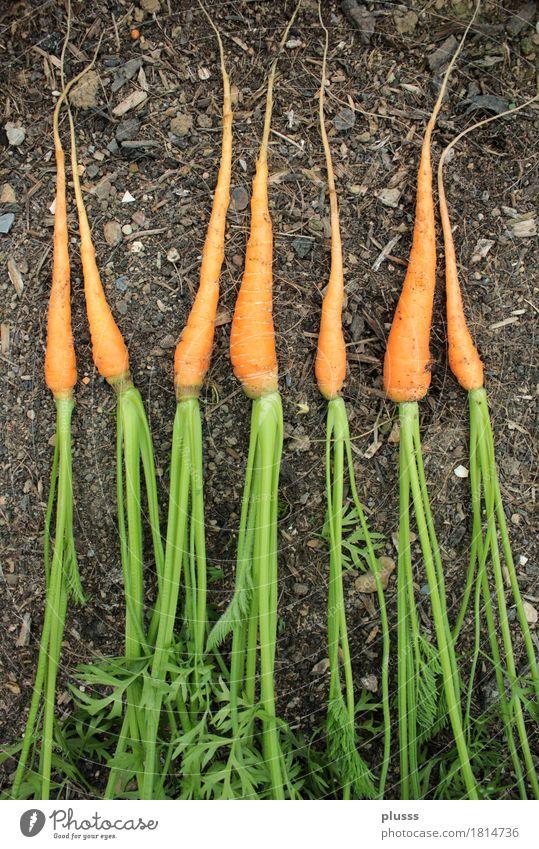 7 carrot gnomes Food Fruit Vegetarian diet Family & Relations Friendship Group Joy Happy Happiness Joie de vivre (Vitality) Humanity Solidarity Help 7 Dwarves
