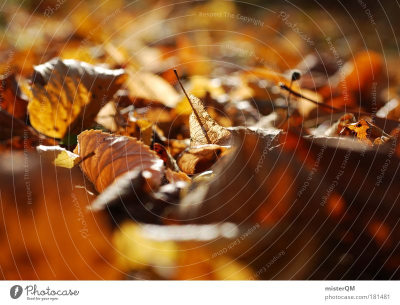 Nature Plant Leaf Calm Relaxation Environment Life Autumn Brown Ground To go for a walk To fall End Seasons Autumn leaves Worm's-eye view