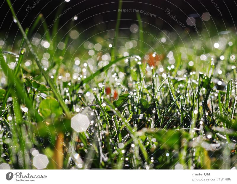 Nature Water Beautiful Cold Meadow Autumn Environment Grass Rain Weather Wet Abstract Plant Fresh Growth Ground