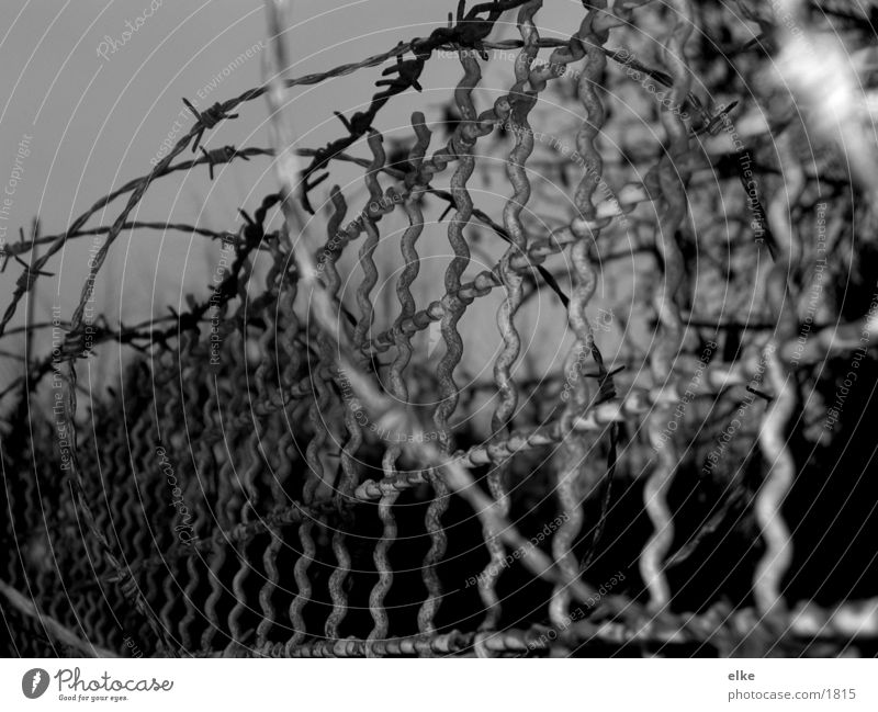 barbed wire Barbed wire Grating Fence Things Black & white photo