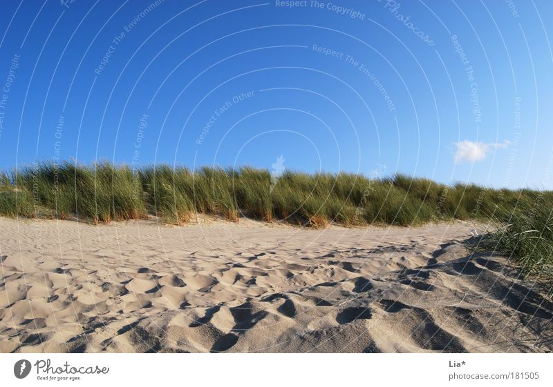 dun idyll Vacation & Travel Beach Landscape Sand Sky Weather Beautiful weather Beach dune Relaxation North Sea Marram grass Lanes & trails Colour photo