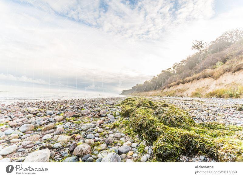 Landscape Clouds Calm Forest Autumn Weather Contentment Baltic Sea Serene Caution Patient Attentive