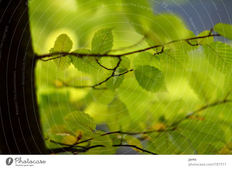 green Colour photo Exterior shot Close-up Deserted Day Light Shadow Sunlight Deep depth of field Central perspective Environment Nature Summer Autumn Climate