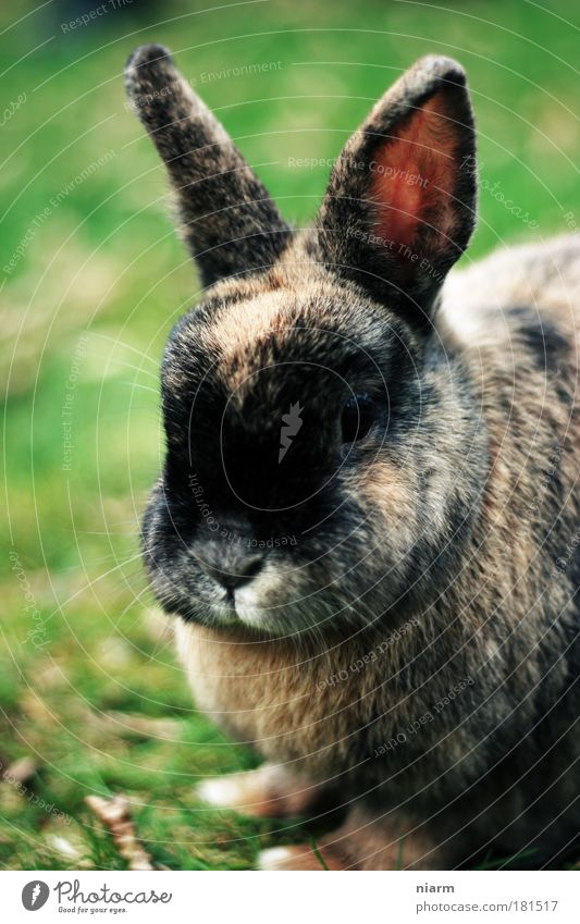 Easter is definitely coming Colour photo Exterior shot Close-up Detail Day Animal portrait Looking Looking into the camera Forward Pet Petting zoo rabbit 1