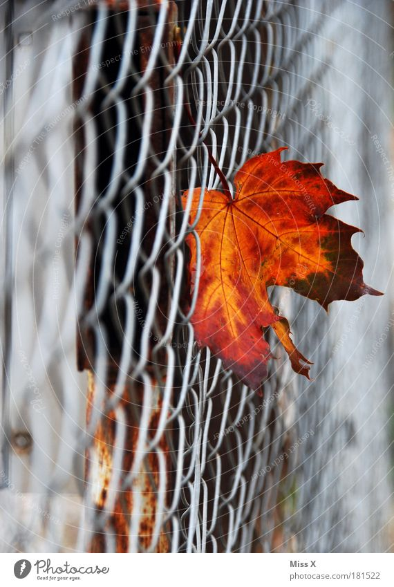 Nature Tree Leaf Cold Autumn Garden Sadness Park Transience To fall Dry Fence Decline Hang Autumn leaves Shriveled