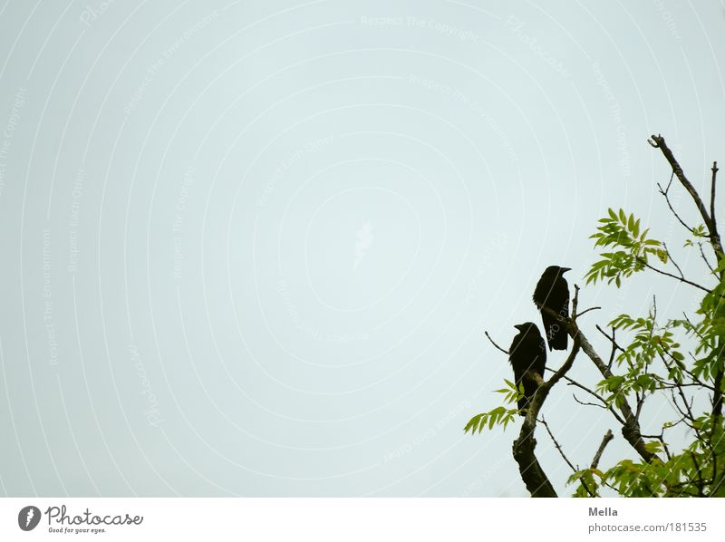 Nature Sky Tree Plant Animal Gray Friendship Moody Bird Environment Sit Wild animal Sympathy Crouch Envy Mistrust