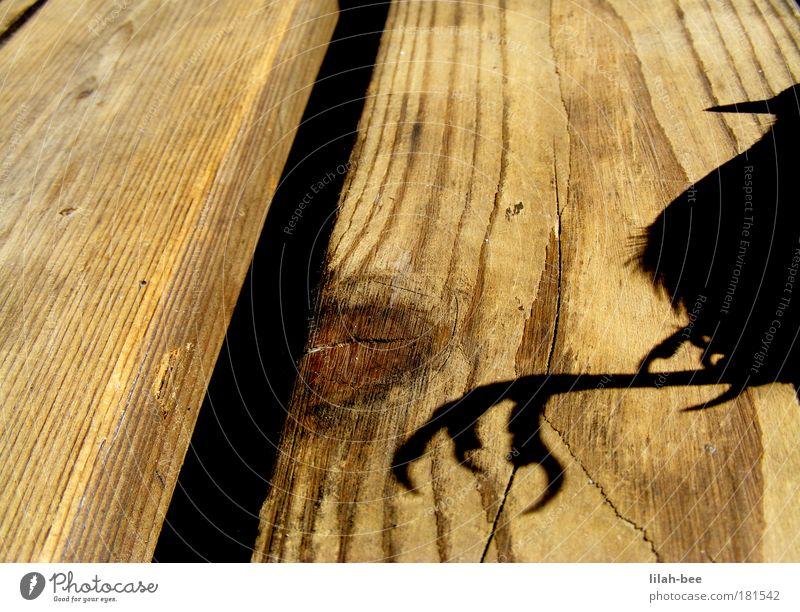 Black Animal Yellow Cold Wood Gray Bird Soft Pelt Wild animal Claw Dead animal