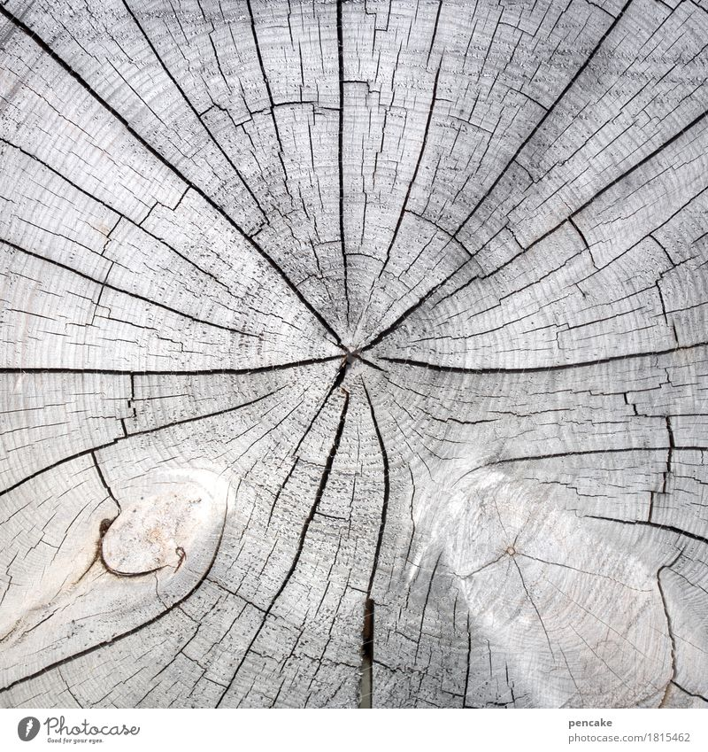 Spoiled by the sun Nature Plant Tree Wood Natural Clean Dry Gray Tree section Crack & Rip & Tear Annual ring Bleached Subdued colour Exterior shot Close-up