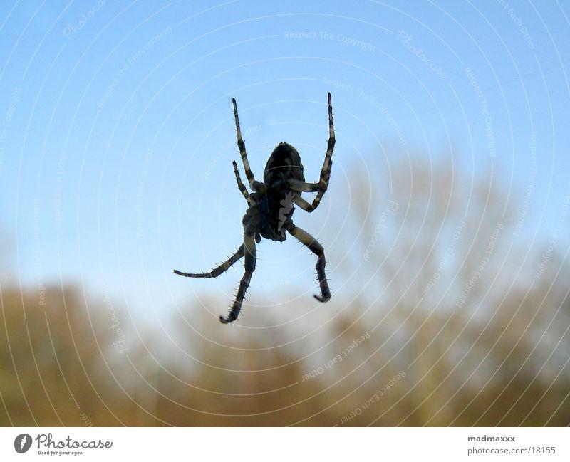 Spiderman Macro (Extreme close-up)