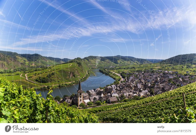 View of Bremm on the Mosel with Mosel loop Summer River Idyll Moselle valley brake calmon Moselle loop Bunch of grapes Vine Eifel Rhineland-Palatinate