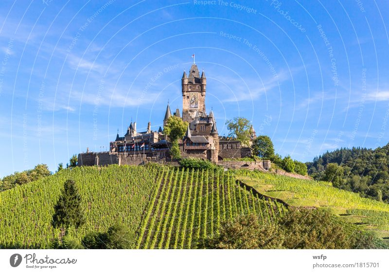 Reichsburg in Cochem on the Moselle Summer River Town Castle Idyll panorama reichsburg Moselle valley Bunch of grapes Vine Eifel Rhineland-Palatinate