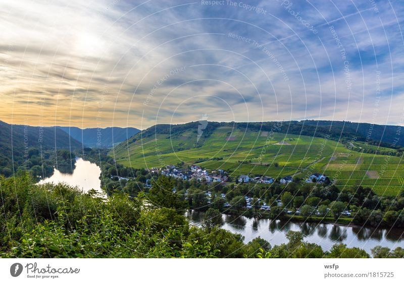 View of the Moselle valley at sunset Panorama Summer River Idyll Sunset Bunch of grapes Valley Picturesque Vine Eifel Rhineland-Palatinate Wine growing Vineyard