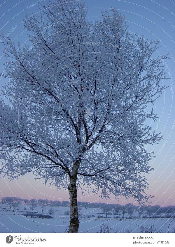 winter tree Winter Tree Cold Landscape